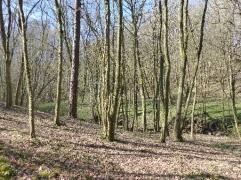 bois-lentilly-ruisseau-du-cerf-11032017-chamaneetmarinette