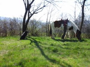 chien-gardien-chamane-sourcieux-17032017-chamaneetmarientte
