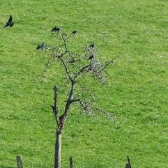 droles-oiseaux-petit-etang-sourcieux-les-mines-11032017-chamaneetmarinette