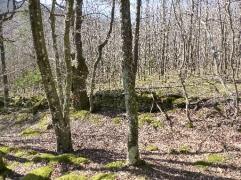 petit-mur-bois-monts-lyonnais-11032017-chamaneetmarinette