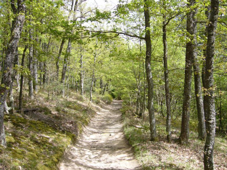chemin-monts-du-lyonnais-avril2017-chamaneetmarinette