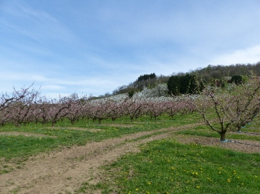 verger-st-pierre-la-palud-mars2017-chamaneetmarinette