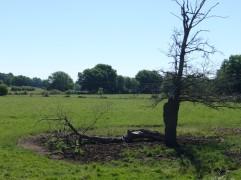arbre-foudroyé-gouise-juin2017-chamaneetmarinette
