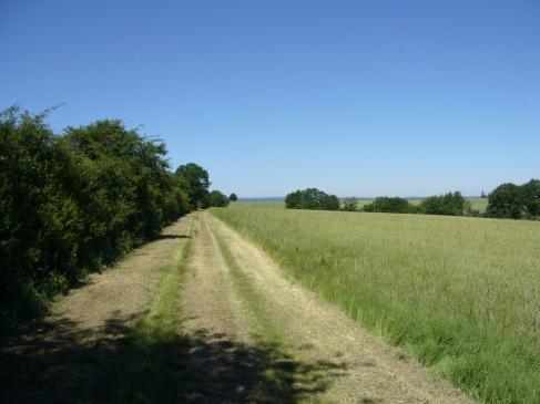 au-milieu-des-champs-gouise-juin2017-chamaneetmarinette