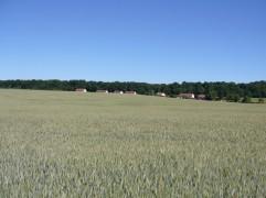 champ-blé-gouise-juin2017-Chamaneetmarinette