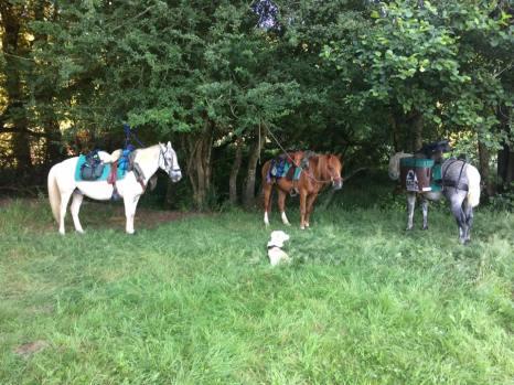 chevaux-repos-juillet2017-CavalBreizh-Chamane-et-Marinette