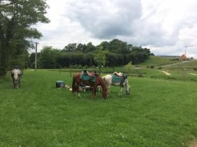 pause-chevaux-en-train-de-brouter-juillet2017-CavalBreizh-Chamane-et-Marinette