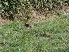 bebe-lapin-ordan-larroque-septembre2018-chamane-et-marinette