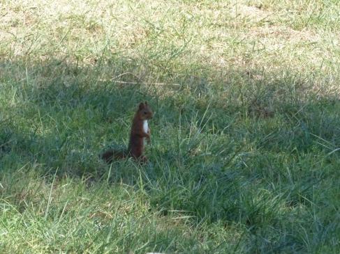 écureuil-observation-ordan-larroque-septembre2018-chamane-et-marinette