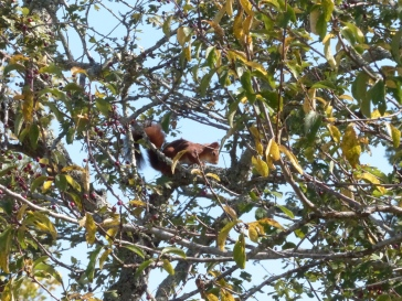 ecureuil-curieux-ordan-larroque-septembre2018-chamane-et-marinette